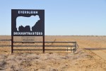 Jenny and Roger Underwood own and operate the Eversleigh property, where they run Droughtmaster cattle.